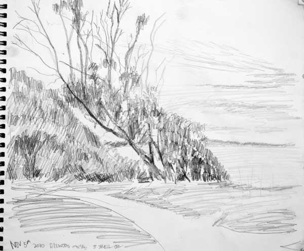 sketch of eucalyptus trees along the edge of the cliff on the Ellwood Mesa